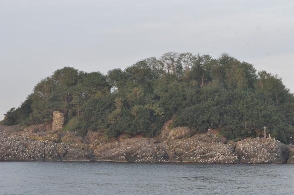 Giresun Adası'nda tarihi mezar ve kalıntılar bulundu