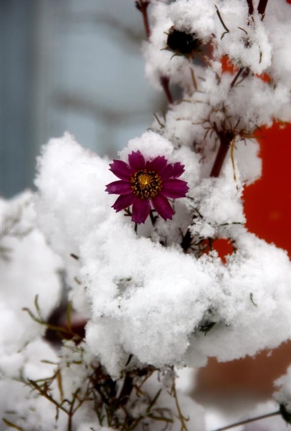 Doğu Anadolu güne karla uyandı