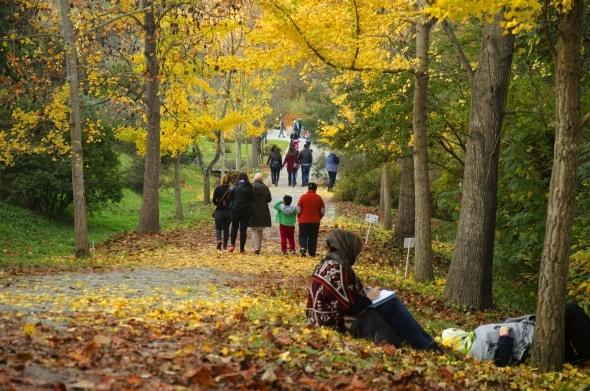 Sonbaharın tüm renkleri Atatürk Arboretumu'nda
