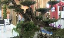 700 yıllık ölümsüzlük ağacı 23 bin TL'den alıcı bekliyor