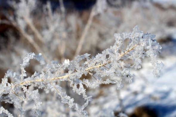 Termometreler eksilere düştü, gölet ve dereler dondu