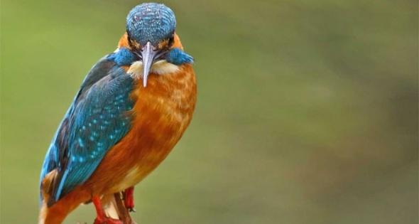 Kızılırmak Kuş Cenneti, Dünya Mirası Listesi'ne girecek