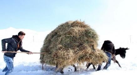 Zorlu kış şartları