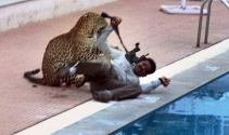 Leopar okula girdi: 6 yaralı