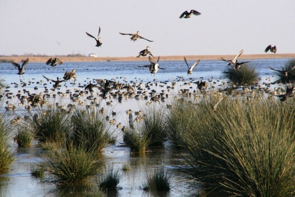 Kuş cennetinde bahar güzelliği
