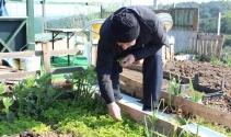 Bu hobi bahçeleri 7'den 77'Ye herkesi toprakla buluşturuyor