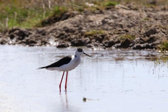 Erçek Gölü Havzası, Türkiye'deki 450 kuş türünün 300'ünü barındırıyor