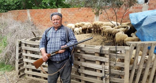İzmirde eller tetikte, köylüler canavar nöbetinde