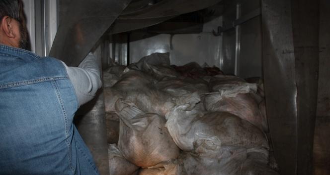 Edirnede 2 ton 700 kilogram kaçak et ele geçirildi