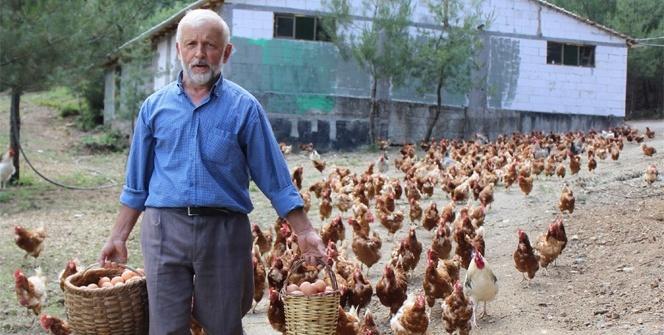 Tavukların efendisi!..