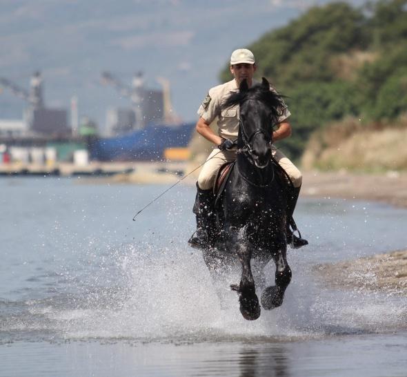Cumhurbaşkanlığı Muhafız Alayı'nın atları denizde eğitiliyor