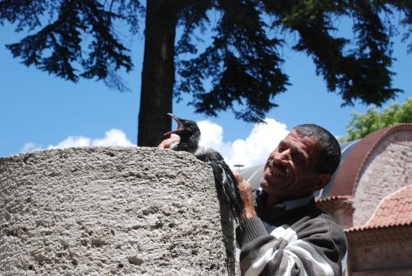 Ağaçtan düşen karga yavrusu için seferber oldular