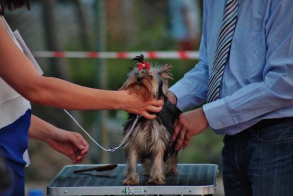 Türkiye'nin en iyi köpekleri