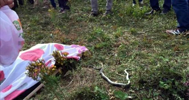 Üzerine bastığı yılanın soktuğu yaşlı adam öldü