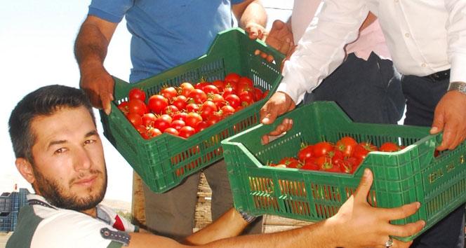 50 bin ton örtü altı domates, Rusyaya gidiyor