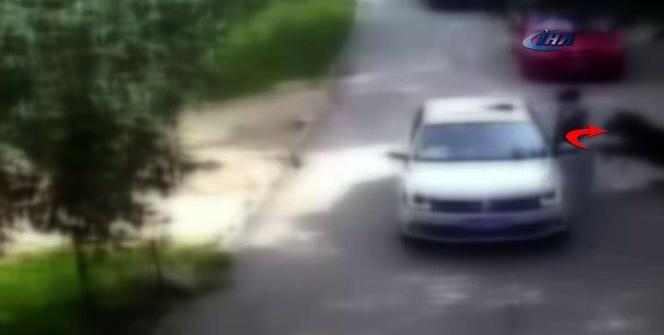 Çin'de kaplan dehşeti: 1 ölü, 1 yaralı