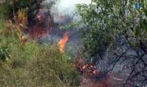Kocaelide 20 dönümlük ormanlık alan kül oldu