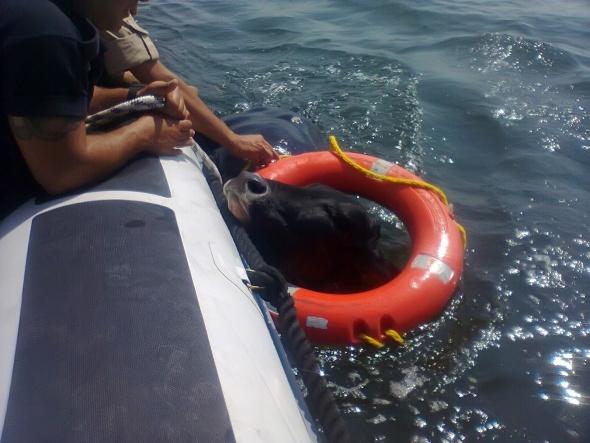 İzmir Körfezi'nde 'Angus' operasyonu