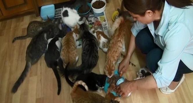 Asgari ücretli kadın evinde 66 kedi besliyor
