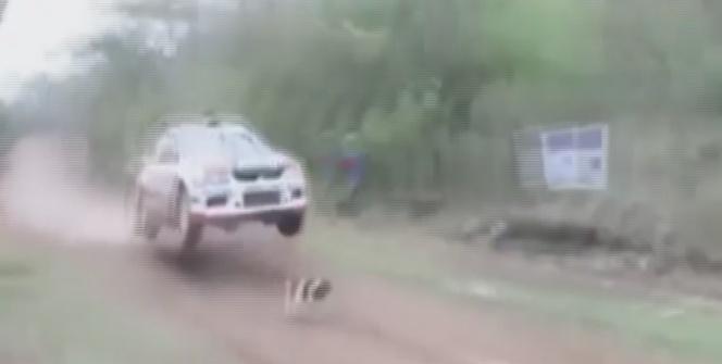 İşte dünyanın en şanslı köpeği