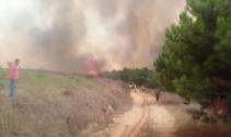 Çatalcada orman yangını
