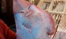 İnsan yüzlü balık görenleri şaşırtıyor
