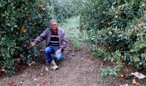 Elma para etmedi, 250 bin ağaç sökülüp odun olacak