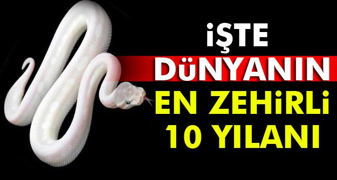 Dünyanın en zehirli 10 yılanı hangileridir? İşte dünyadaki en zehirli 10 yılan türü
