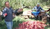 Niğdede elma hasadı başladı