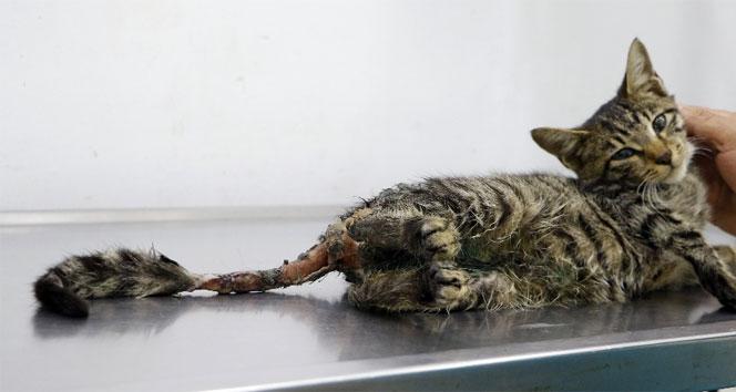 Bu iğrençliğin adı yok! Kediye tecavüz ve işkence