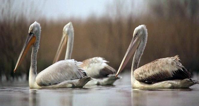 Türkiyenin kuşları belgesel oldu