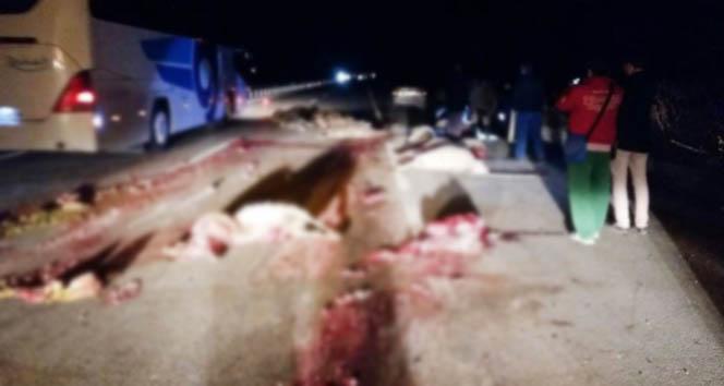 Koyun sürüsüne otobüsün çarptı, 30 koyun telef oldu