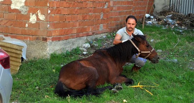 Hasta at tedavi edildi