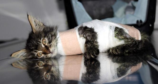 Otomobilin ezdiği yavru kedi protez bacakla yürüyecek