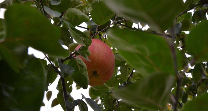 7 yıl sonra gelen esrarengiz meyve