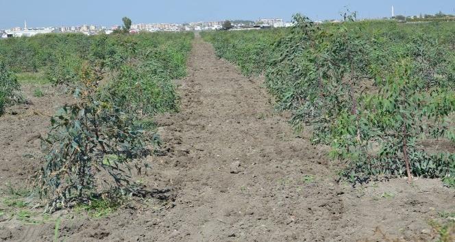 Mersin'de endüstriyel ağaçlandırma çalışmaları sürüyor