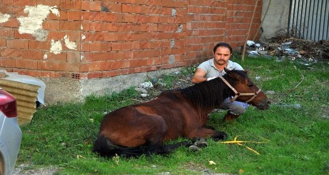 Sahibinin ölüme terk ettiği hasta at hayata döndürüldü