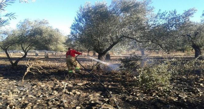 Edremit'te zeytinlik yangını