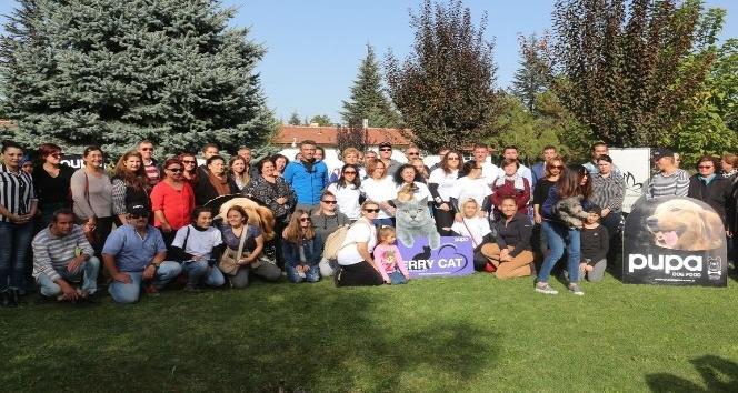 Odunpazarı Belediyesi Kedi Evleri Projesi'ne ESYEM'den destek