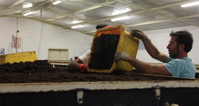 150 milyon solucanla, yılda 500 ton organik gübre üretiyor