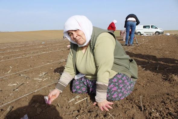 Milli tohum ıslah çalışmalarında kadın emeği
