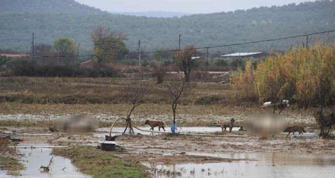 Tarım arazilerini sular bastı, hayvanlar telef oldu