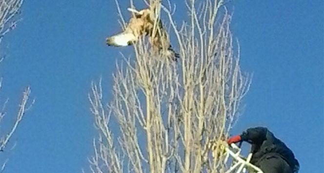 Ağaçta mahsur kalan kartalın imdadına itfaiye ekipleri yetişti