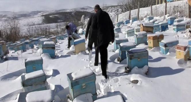 Kar altında kışlatma, arının ömrünü uzatıyor
