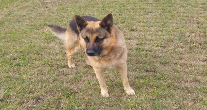 Hava ambulans servisinin bekçi köpeği kayboldu