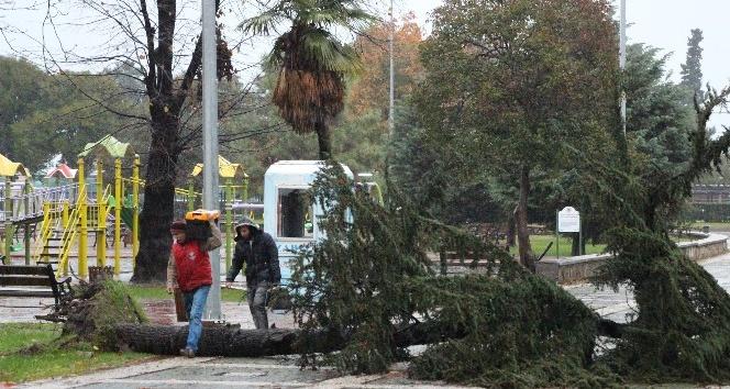 Atatürk Parkı'nda ağaç yıkıldı