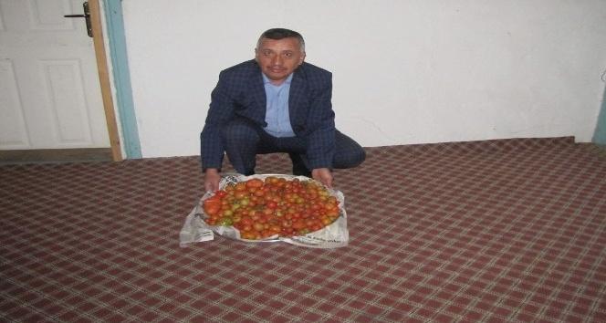 Kış boyunca kendi ürettikleri domatesleri tüketiyorlar