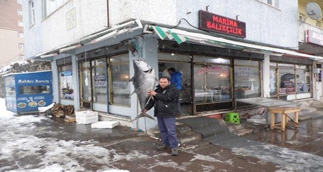 Kars'ta 45 kiloluk dev Orkinos!