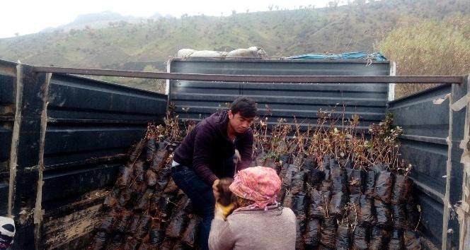 Sason'da 15 bin adet fıstık fidanı dağıtıldı