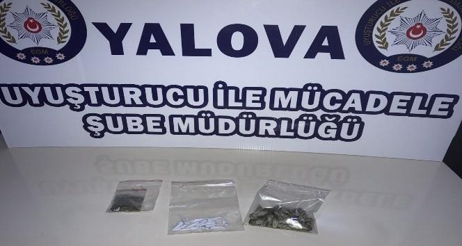 Yalova ve İstanbul'da bonzai operasyonu